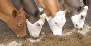 Opportunities in the animal feeds industry