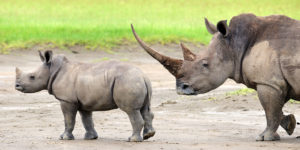 Top 10 Kenya Tourist destination, rhinos, water games