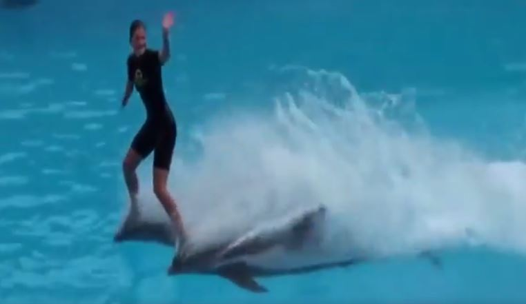 Video: Playing with the Sharks